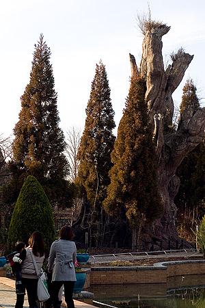 東山植物園冬-8