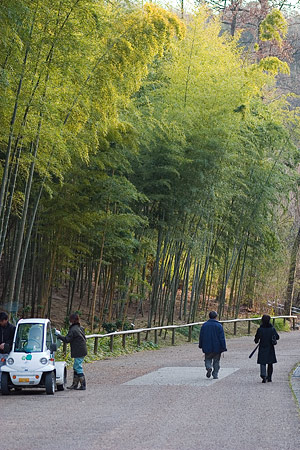 東山植物園冬-9
