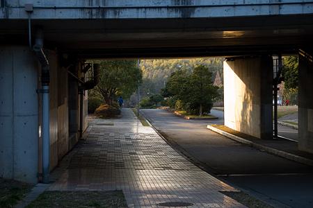 小幡緑地東園-1