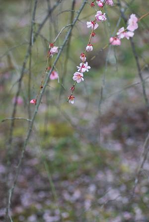 松平郷の花-8