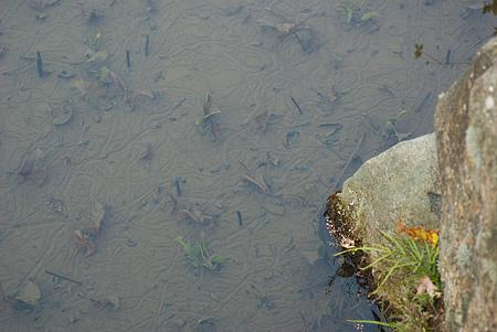松平郷水風景-10