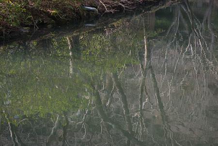 松平郷水風景-4