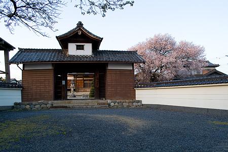 覚成寺の桜-5