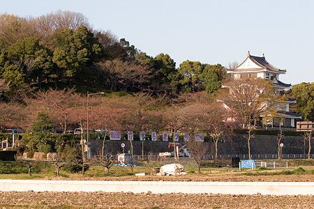 近所桜3月-3