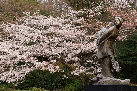 平和公園桜-1