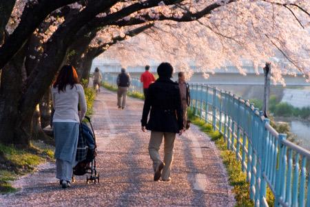 香流川桜1-11