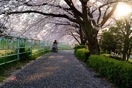 香流川桜1-3