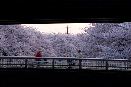 香流川桜2-5