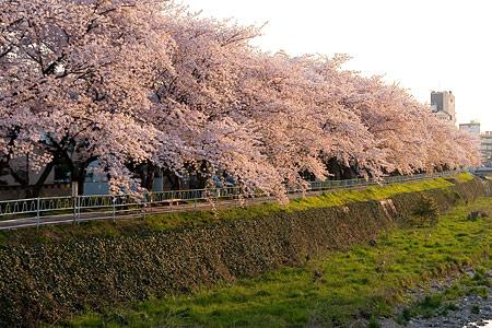 香流川桜2-6