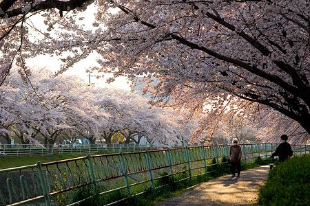 香流川桜2-9