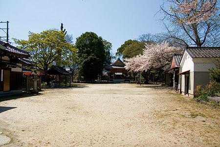 膳所神社-4