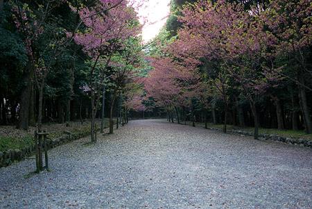 近江神宮-1