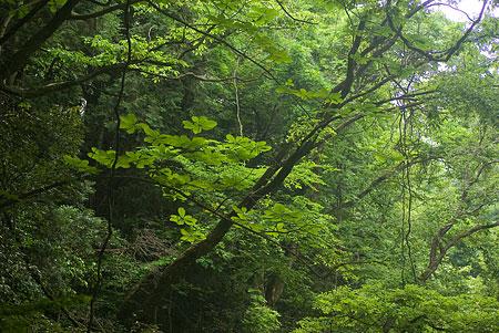 5月海上の森3-10