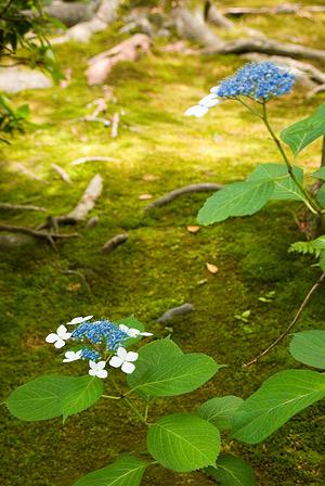 諸戸氏庭園1-11