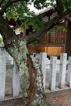 桑名神社3-3