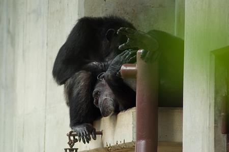 東山動物園雨2-3