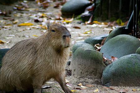 東山動物園雨2-6