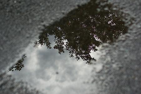 東山動物園雨3-11