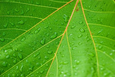 東山動物園雨3-2