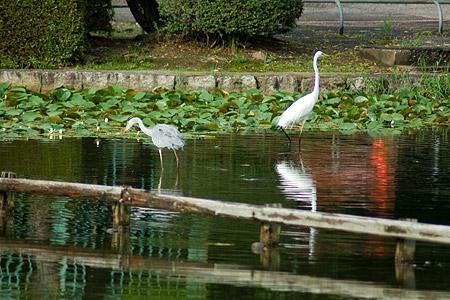 東山動物園雨3-4