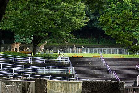 東山動物園雨3-7