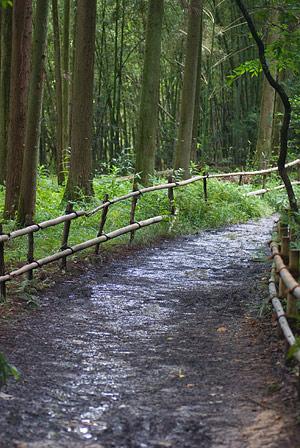 雨に濡れた散策路