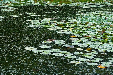 夏草に覆われた池
