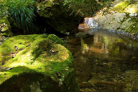 愛知県民の森1-4