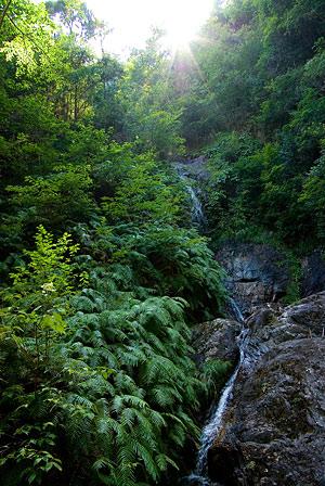 愛知県民の森1-5