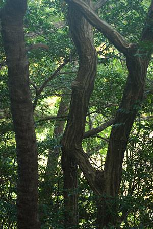 小幡緑地本園2-5