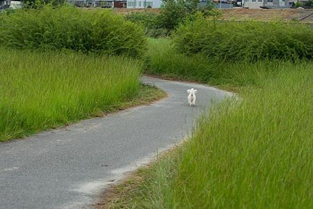 矢田川散歩2-2
