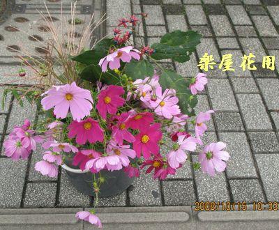 IMG_0075gakuya.jpg